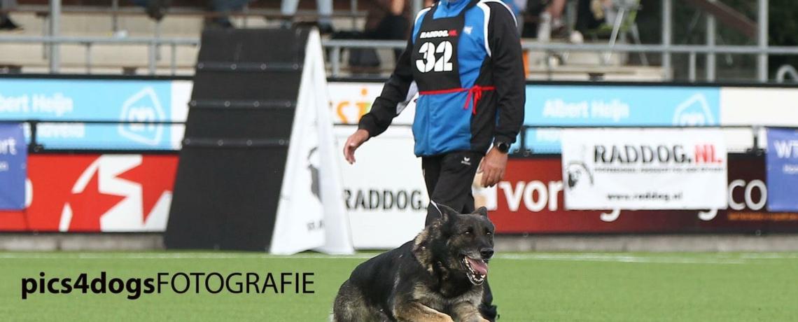 Imzedrifts Genna & Jan Wernsen 2021 Dutch Champions for Germans Shepherds
